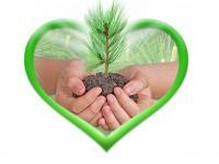 Экологическая акция по озеленению детского сада